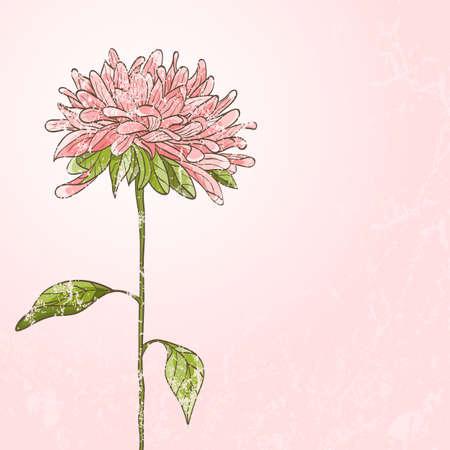 crisantemos: Dibujado a mano de flores con efecto grunge