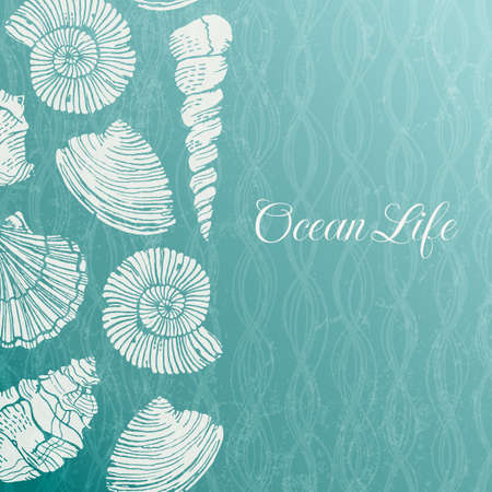 cockle: background with sea shells