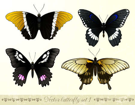 Set of realistic butterflies. Contains transparency and blending modes. Vector