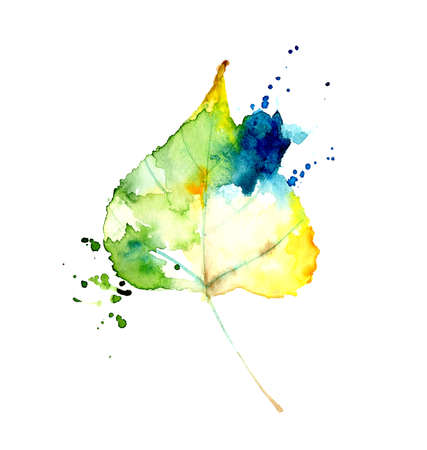 Watercolor autumn poplar leaf isolated on white background. Hand drawn stylized illustration.