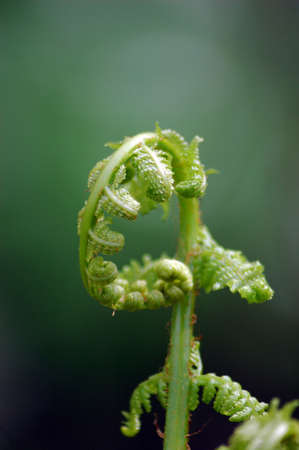 Young sprouts of fern and horse-tail early in spring photo
