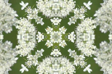 psikhodelika: Kaleidoscope from little white flowers