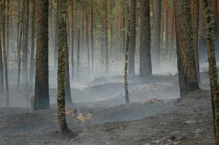 eerie: Smoke from a fire in the wood on coast of lake Deep, near to Vyborg. Russian Federation. Stock Photo