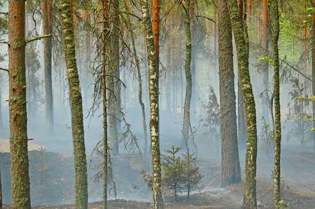 Smoke from a fire in the wood on coast of lake Deep, near to Vyborg. Russian Federation. Stock Photo - 4351463