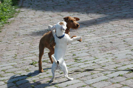 rifrug: Two puppy, playing with each other