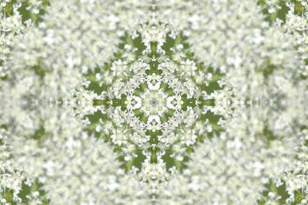 weakening: Kaleidoscope from little white flowers