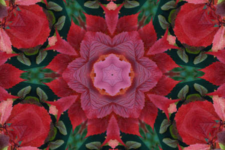 Original pattern textured with collage from leaves like flower Poinsettia (Christmas star or Winter rose). photo