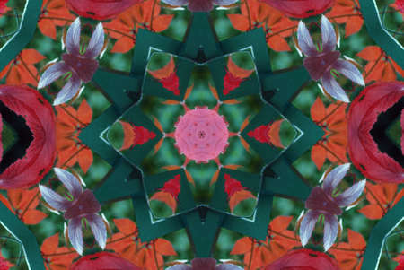 Original pattern textured with collage from leaves like flower Poinsettia (Christmas star or Winter rose). Stock Photo - 4482260