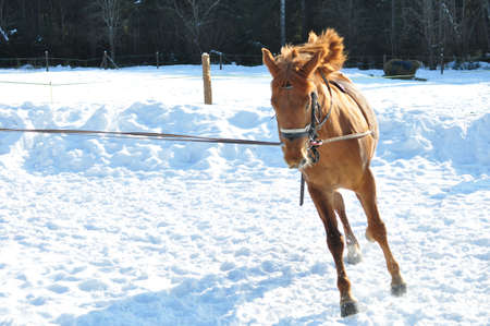 Horse running in winter, countryside in the background. Stock Photo