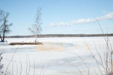snowbound: birch in the middle of snow-bound plain