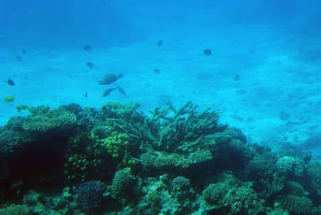 Underwater scene of a tropical coral reef. Stock Photo - 4708351