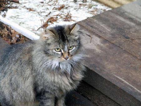 Grey cat Stock Photo - 4942472
