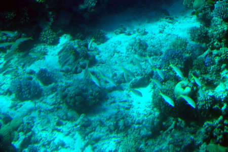 Underwater scene of a tropical coral reef. photo