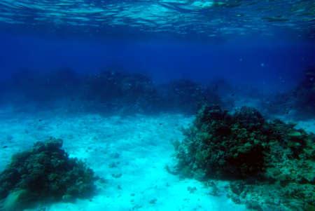 corales marinos: Escena submarina de un arrecife de coral tropical.