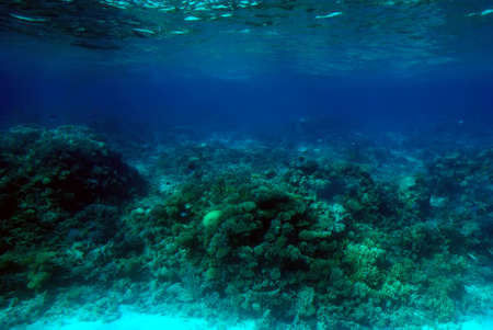 Underwater scene of a tropical coral reef.