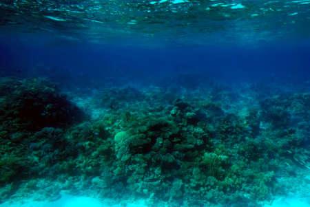 ecosistema: Escena submarina de un arrecife de coral tropical.