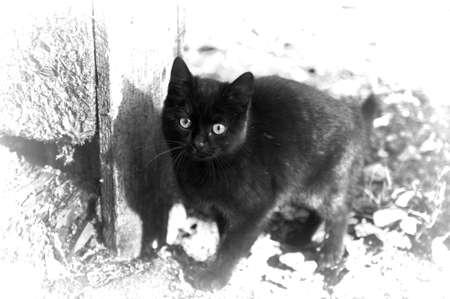 brown kitten in the street photo