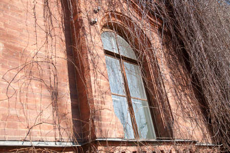 twined: old brick house, twined by a vine early in spring Stock Photo