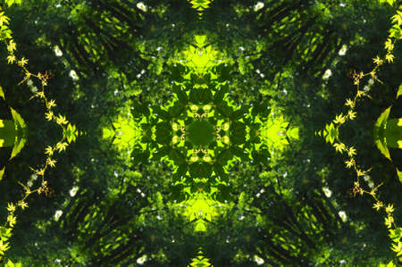 green abstract decorative pattern Stock Photo - 6401937