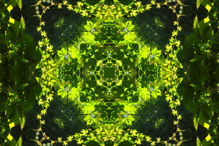green abstract decorative pattern Stock Photo - 6401934