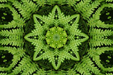 meditatiya: Ornament from a fern