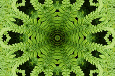 photosynthesis: Ornament from a fern