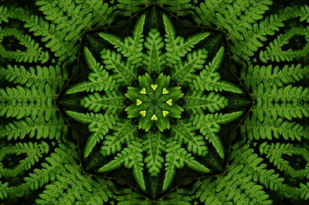 Ornament from a fern Stock Photo - 6514536