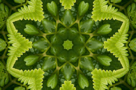 polypodiopsida: Ornament from a fern