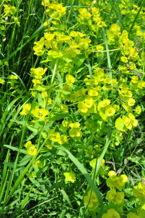 Background from it is yellow green vegetation in the field Stock Photo - 6555832