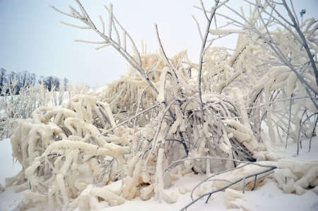 The branches covered with snow and ice Stock Photo - 6593030