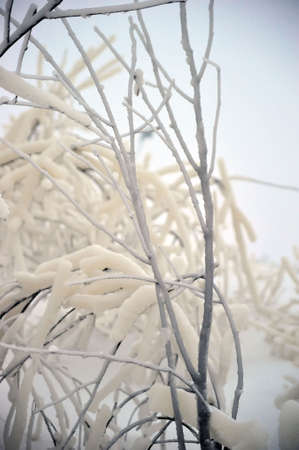 The branches covered with snow and ice Stock Photo - 6593029