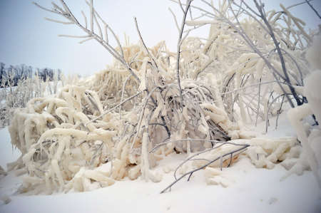 The branches covered with snow and ice Stock Photo - 6666775