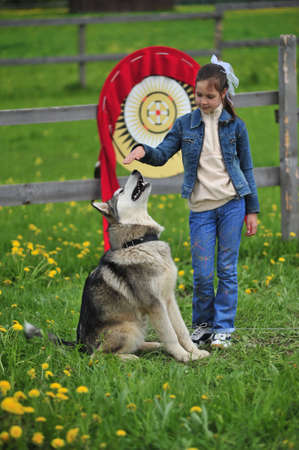 The little girl near to Husky photo