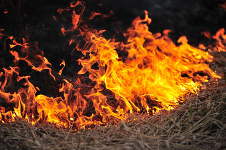 Burning grass Stock Photo - 7112686