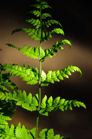 Fern sheet on a brown background Stock Photo - 7114426