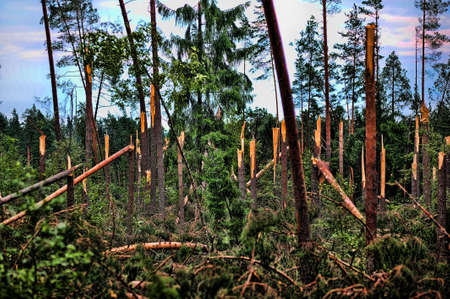 Wood with the broken trees. Consequences of hurricane storming under Sankt Petersburg, Russia Stock Photo - 7540285