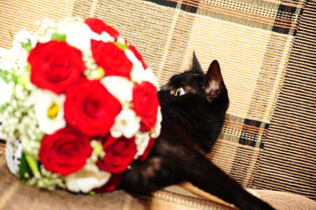moggi: black cat next to a bouquet of flowers Stock Photo