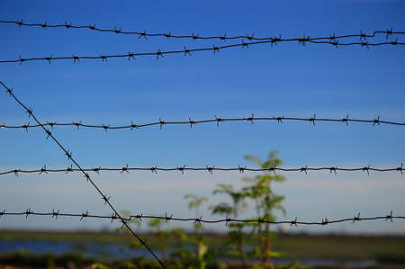 Barbed wire against the sky Stock Photo - 7642505
