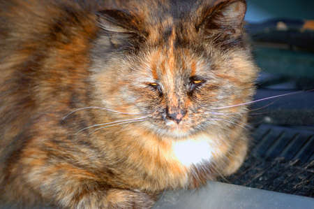 rueful: Old and sick street cat