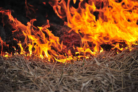 Field on fire, burning dry grass photo