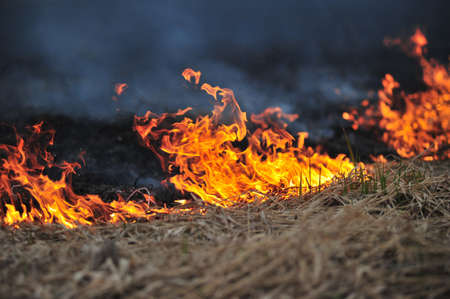 fire damage: Field on fire, burning dry grass