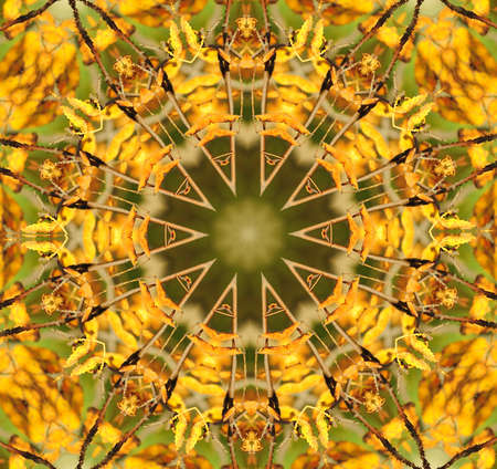 Kaleidoscope in pretty harvest colors of  yellow and green. photo
