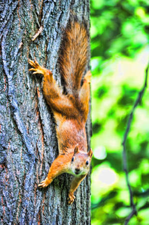 squirrel on a tree photo