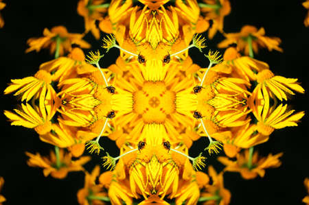 yellow flower ornament photo