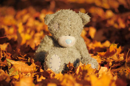 Small gray bear among maple autumn leaves photo