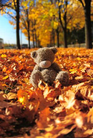 Small gray bear among maple autumn leaves photo
