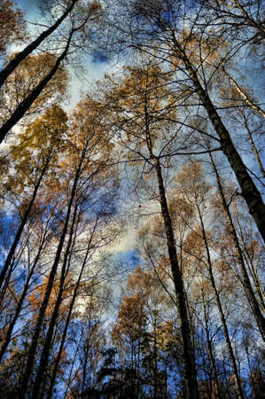 the tops of trees against the blue sky photo