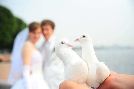 Two white pigeons in hands photo