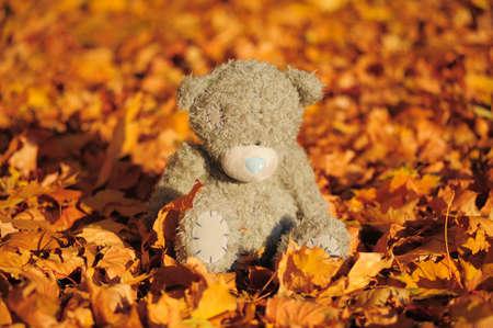 Life of the teddy-bear photo