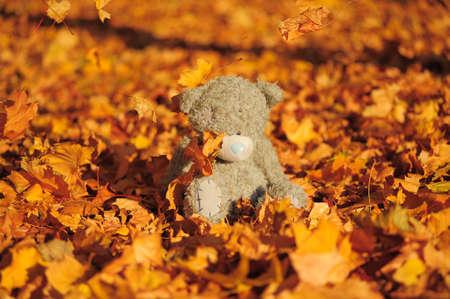 teddy bear amongst autumn leaves photo